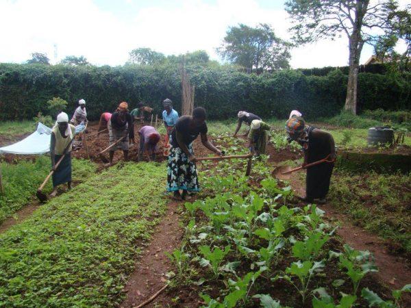 Widows Organic Farming
